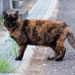 【ニャー その壱】サビ猫のケン - 谷中ニャンダフルライフ