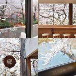 今年のお花見はどこへ行く?いつもと違う楽しみ方 ― 桜の見えるお店5選