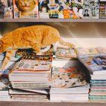 アタシが選ぶ本と週末(10)「ネコを撮る」 著:岩合光昭