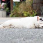 【ニャー その伍】ゴマ猫のヤスケ- 谷中ニャンダフルライフ