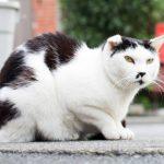 【ニャー そのⅣ】ヒゲ猫のチョビ- 谷中ニャンダフルライフ