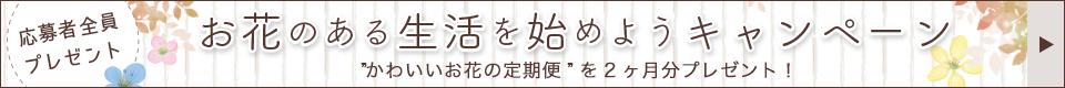 Woman.CHINTAIのからのお問合せと契約で家電などがもらえる!プレゼントキャンペーン実施中!