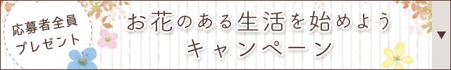Woman.CHINTAIからのお問合せと成約でお花が届く!全員プレゼントキャンペーン実施中!